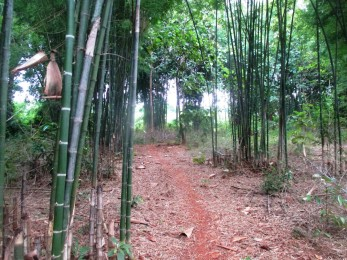 NKM bamboo forest