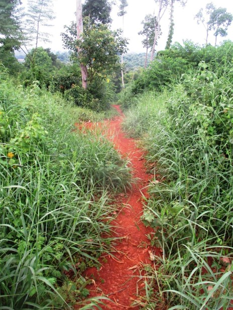 NKM walking trail