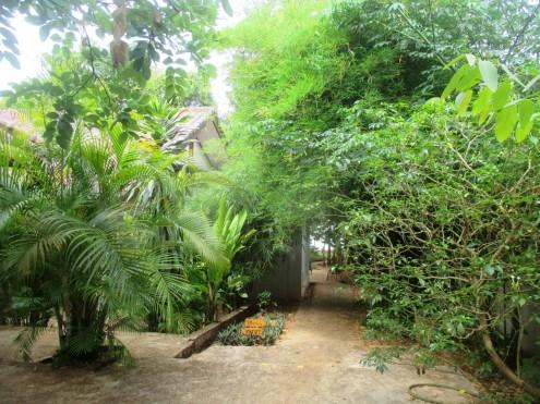 NKM homestay garden (4)